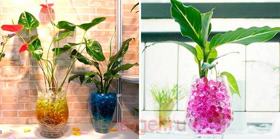 Выращивание растений в гидрогеле